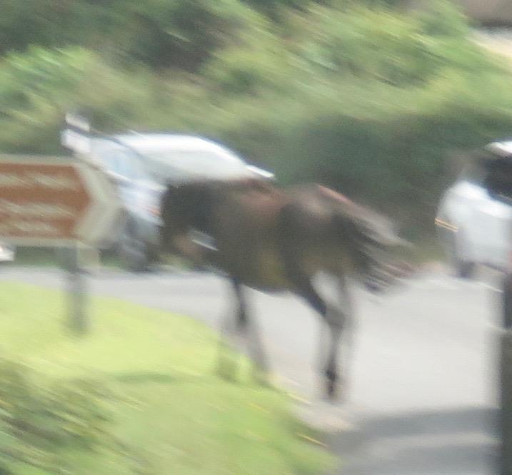 Pony on the move