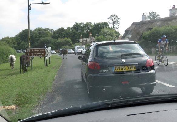 Ponies in traffic 13