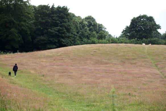 Dog walker on mound