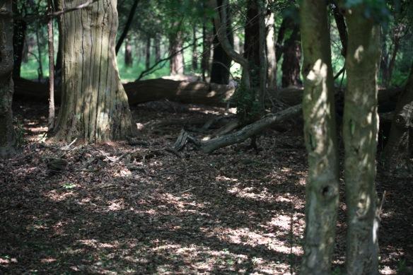Woodland 3