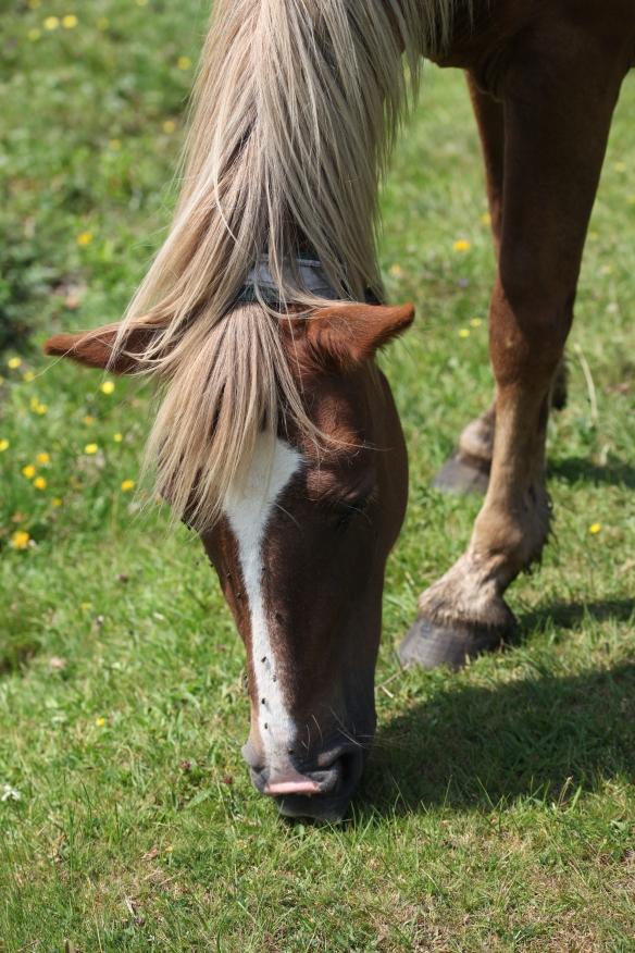 Pony and flies
