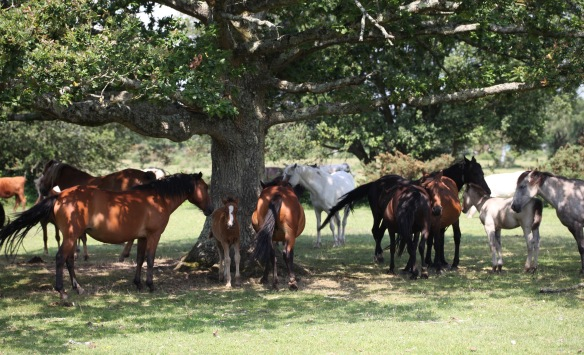 Ponies and foals 2