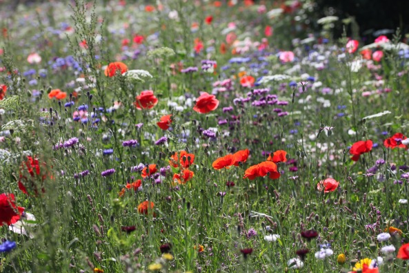 Wildflower meadow 8