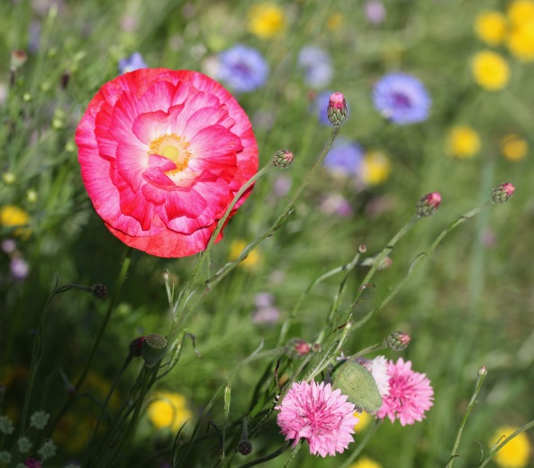 Wildflower meadow 15