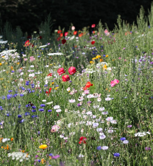Wildflower meadow 20