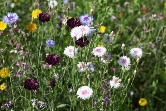 Wildflower meadow 24