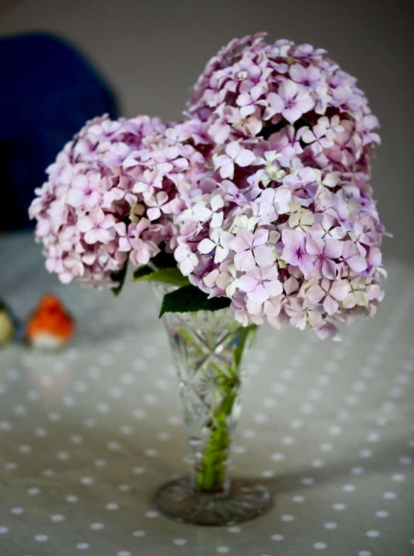 Hydgrangea in vase