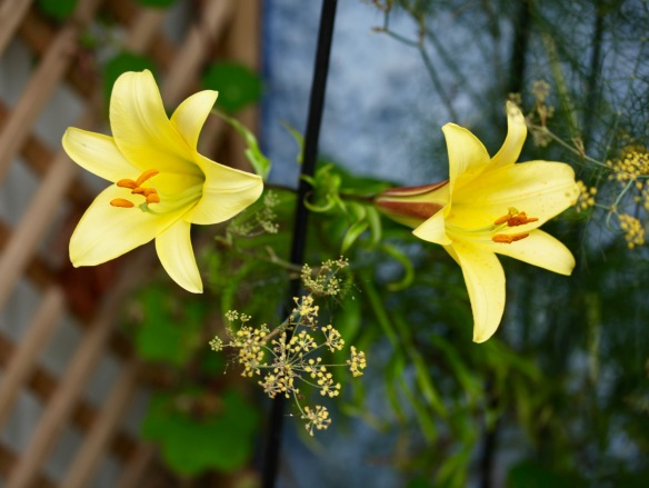 Lilies and bronze fennel flowers