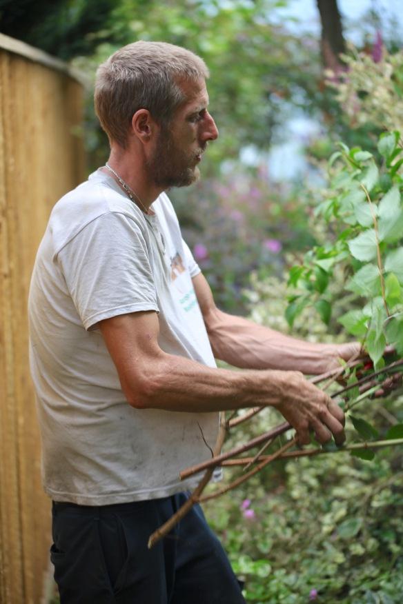 Aaron pruning philadelphus 2