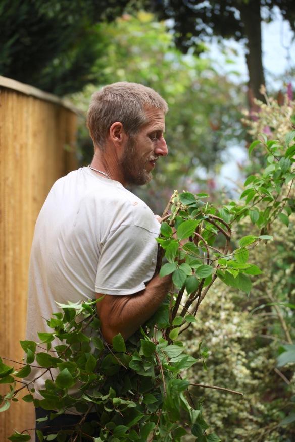 Aaron pruning philadelphus 4