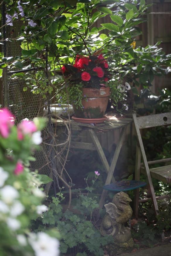 Dragon and begonias through greenhouse window