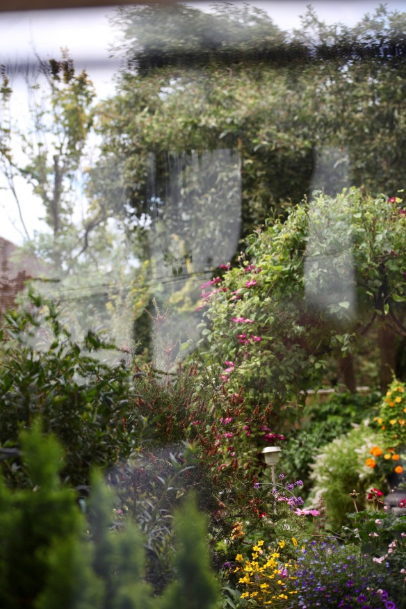 View through greenhouse window 11