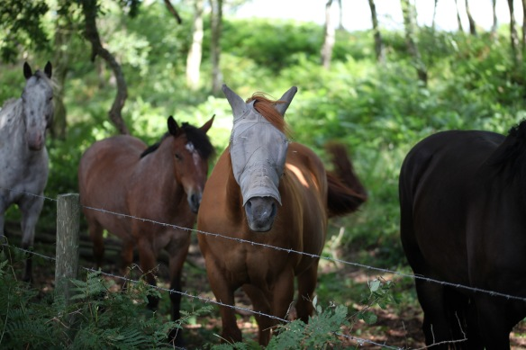 Horses in shade 2