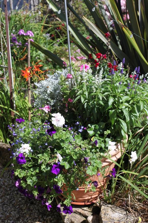 Petunias, geraniums, etc
