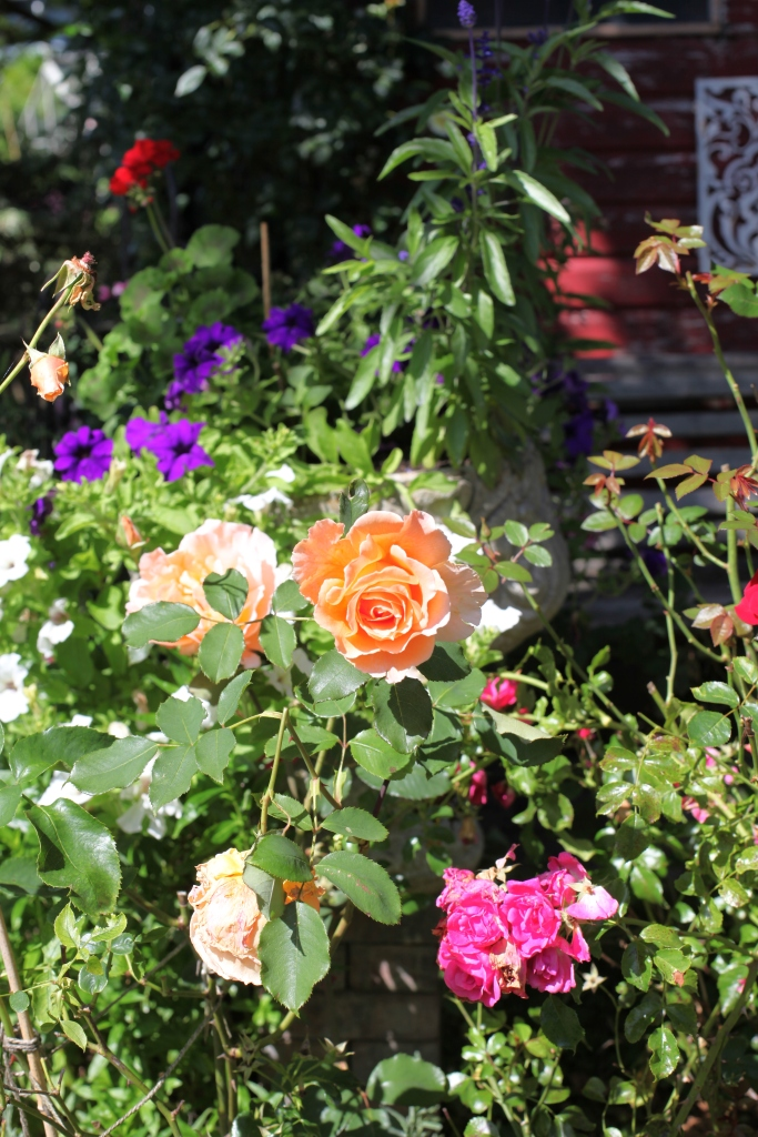 Rose Garden featuring Just Joey