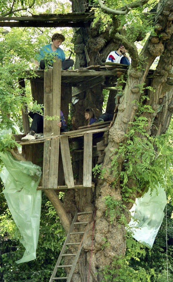 Building Tree House 1