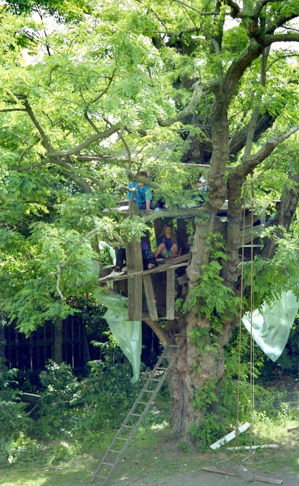 Building Tree House 2