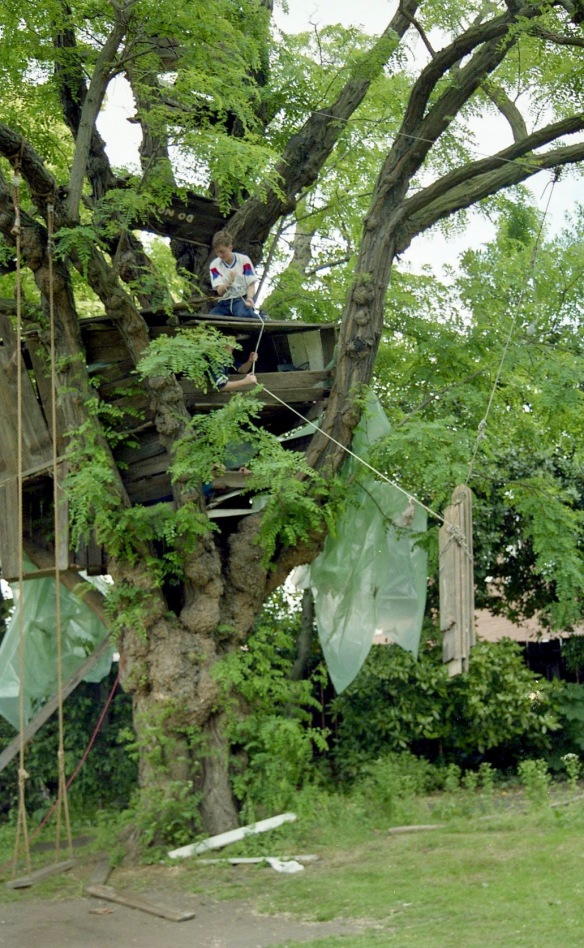Building Tree House 8
