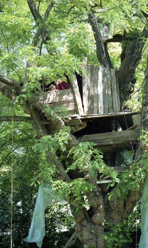 Building Tree House 26