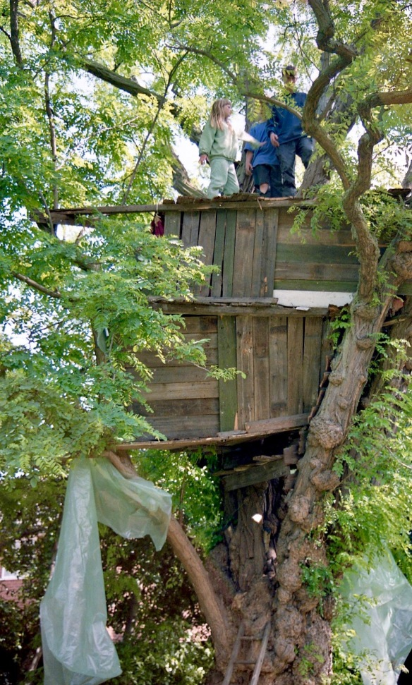 Building Tree House 30