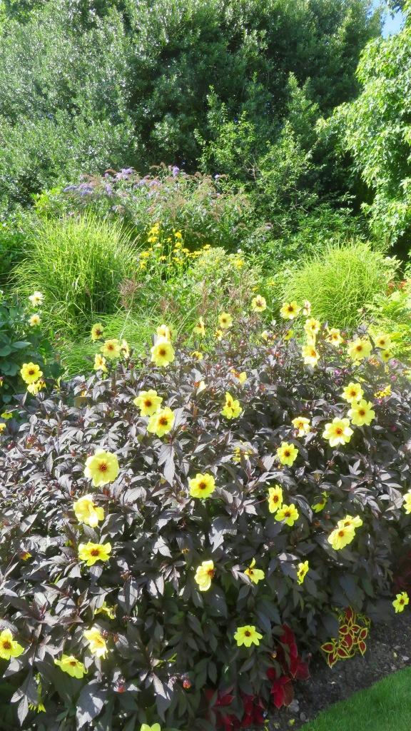 Herbaceous border 1