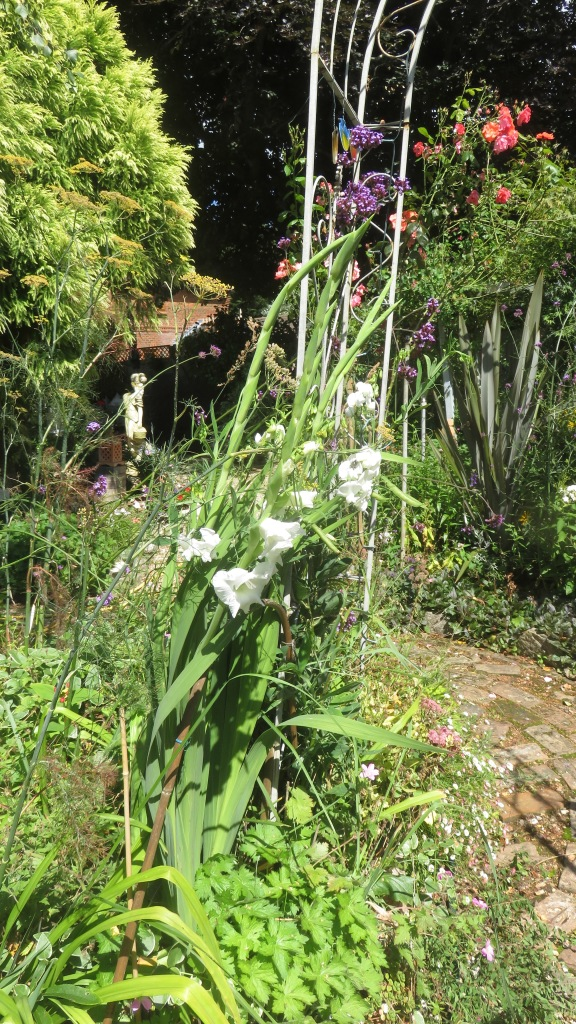 Sweet peas and gladioli white