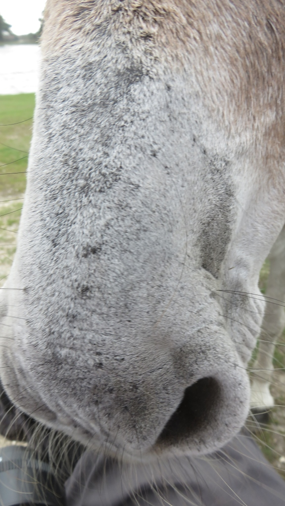 Donkey close-up 2