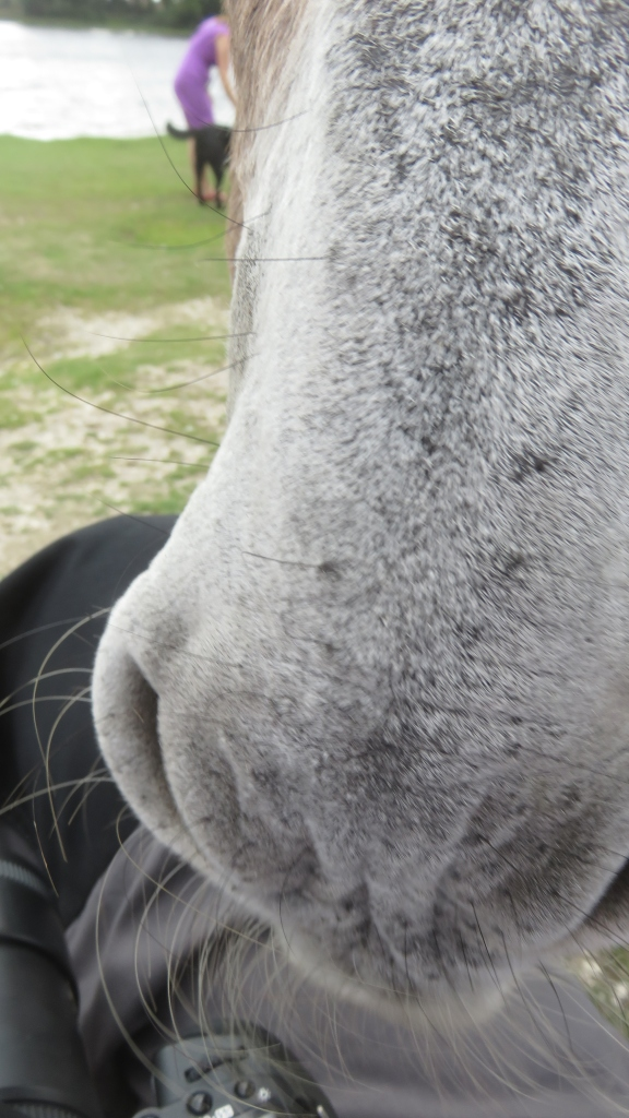 Donkey close-up 3