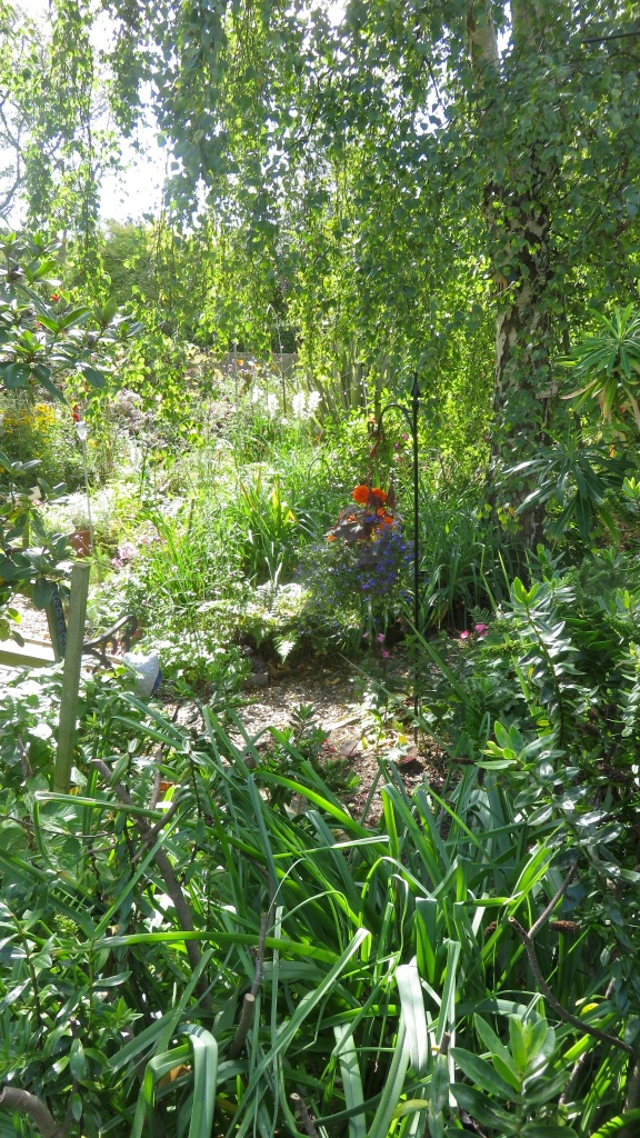 View from Phantom Path across Weeping Birch Bed