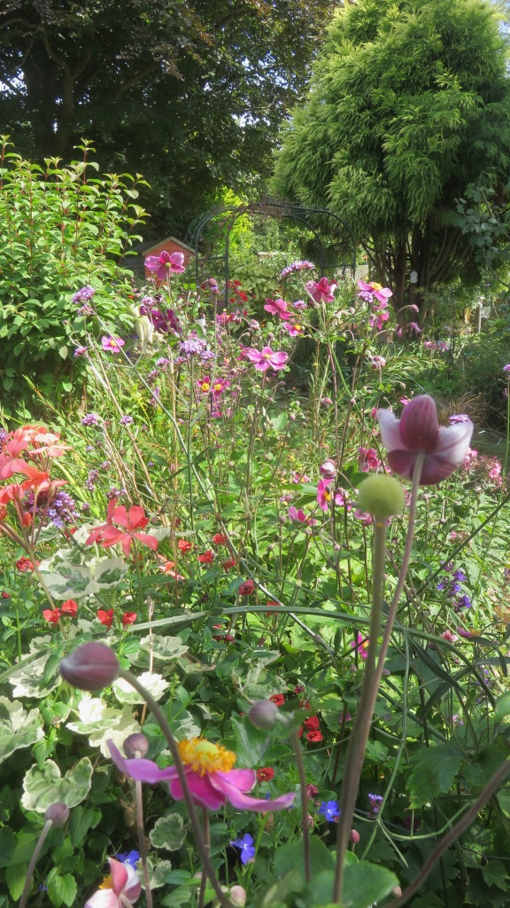 Garden view across Margery's Bed