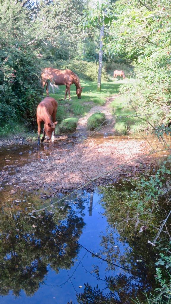 Ponies at pool 1