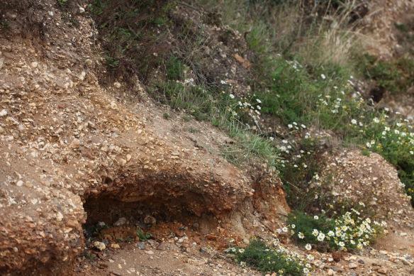 Cliffs at Lepe 2
