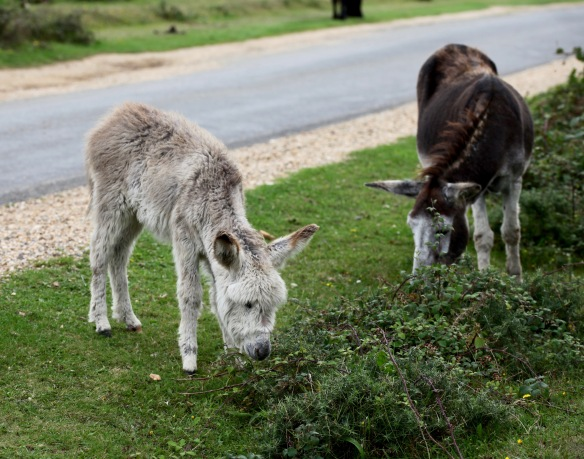 Donkey and foal 1