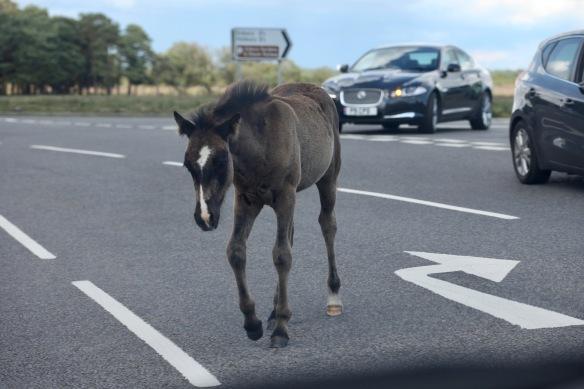 Foal on road