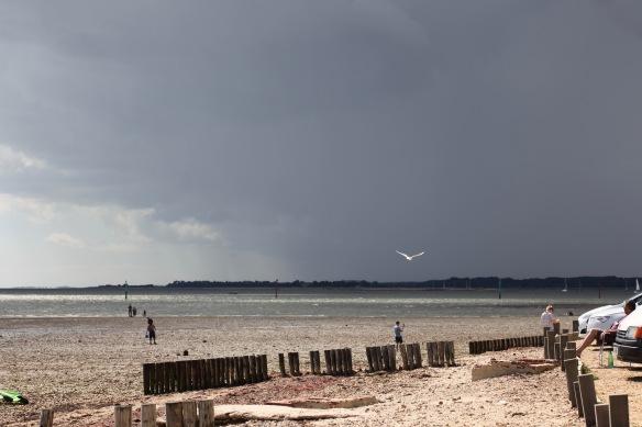 Gull against louring sky