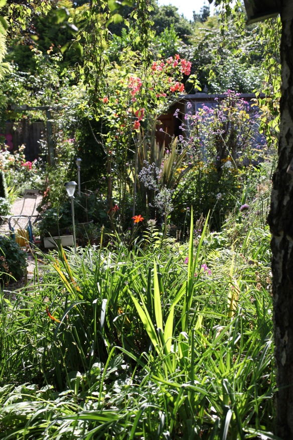 Garden view from beside Weeping birch