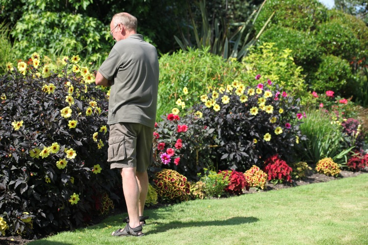 Visitor admiring herbaceous border