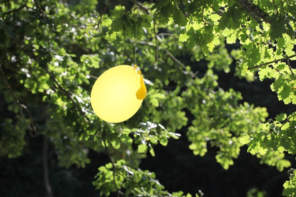 Balloon in oak tree
