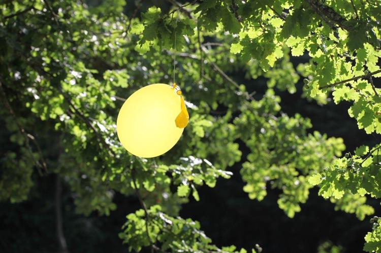 Balloon in oak tree