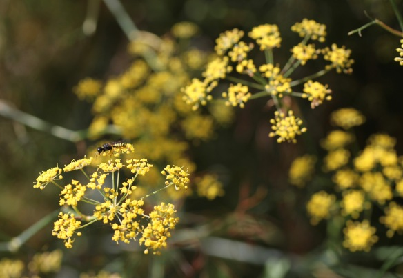 Insect on bronze fennel