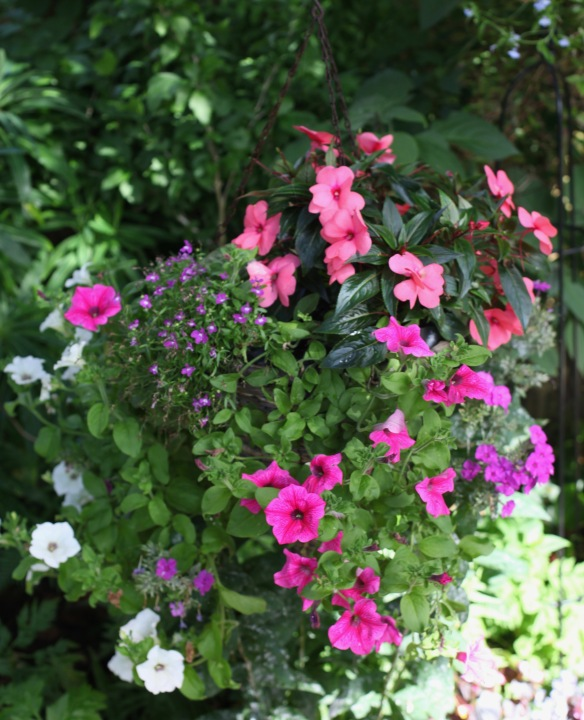 Petunias geraniums, and lobelia