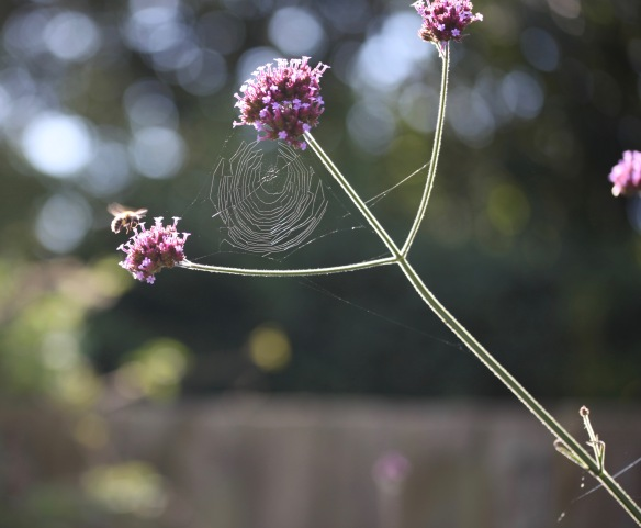 Bee and spider's web 1