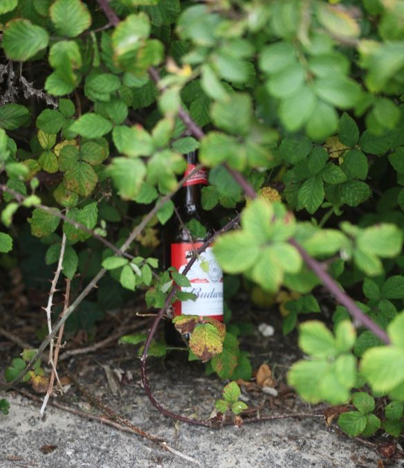 Budweiser bottle in hedge
