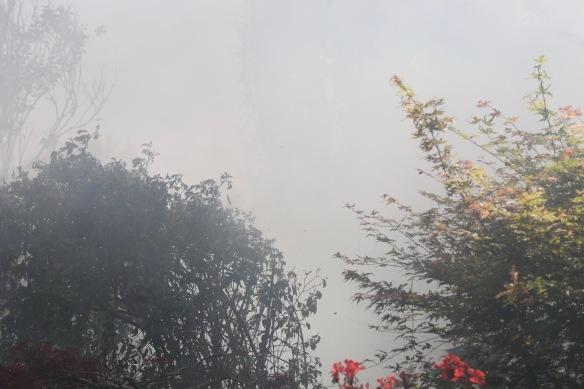 Smoky garden 2