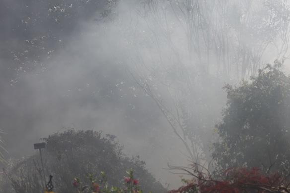 Smoky garden 3