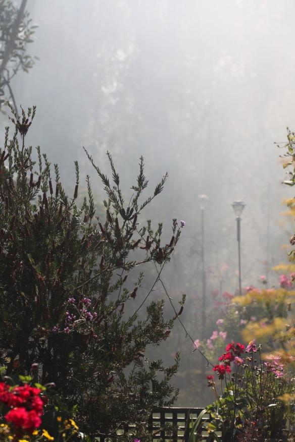Smoky garden 5