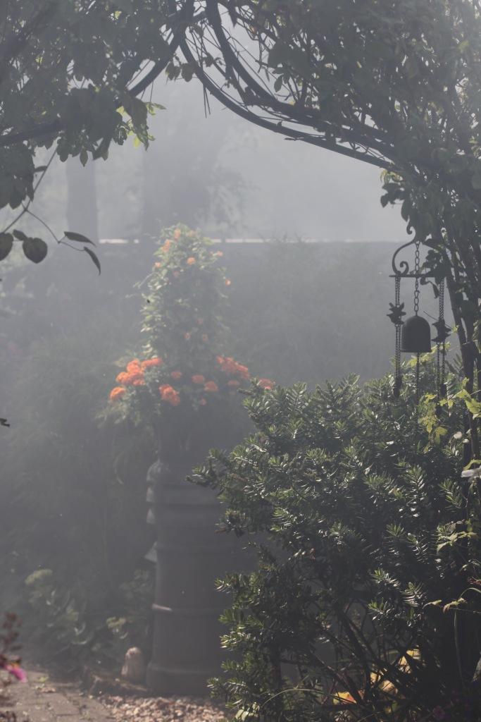 Smoky garden 6
