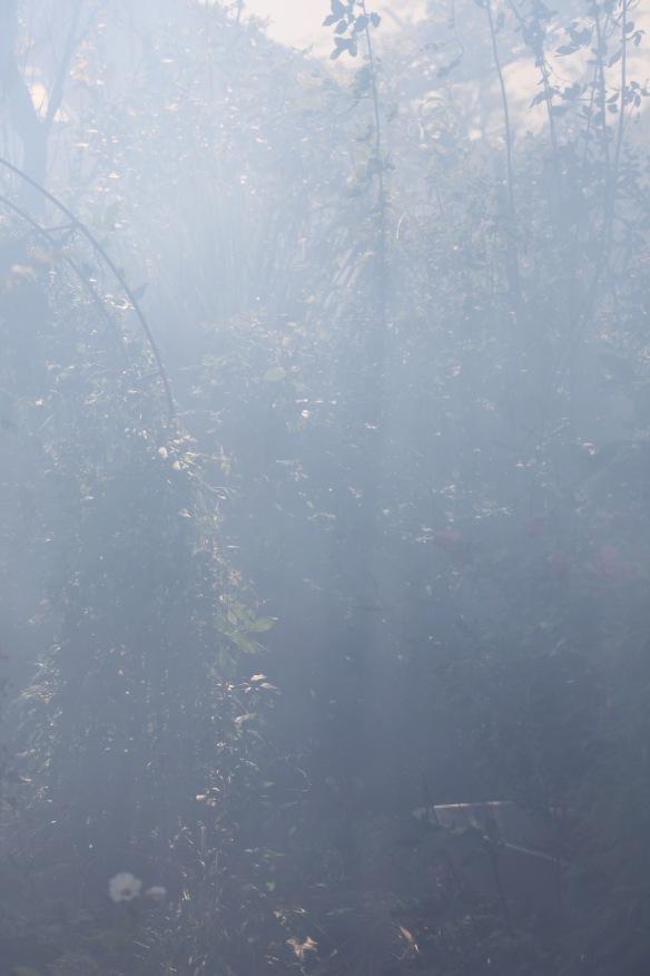 Smoky garden 7