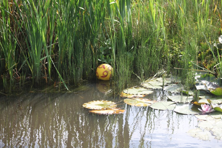 Ball and water lily