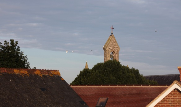 Doves flying round belfry 2
